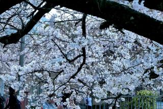 190406tetsugakunomichi(8).jpg