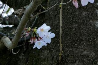 190406tetsugakunomichi(9).jpg
