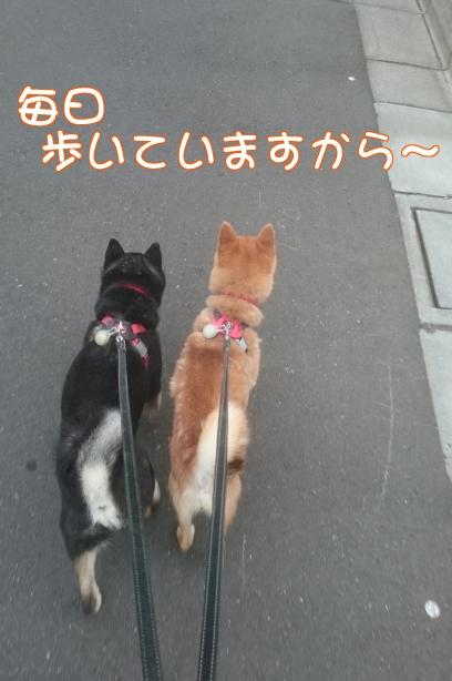 歩いていますからね