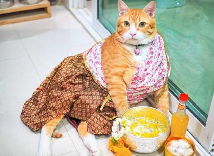 Cat ソンクラーン