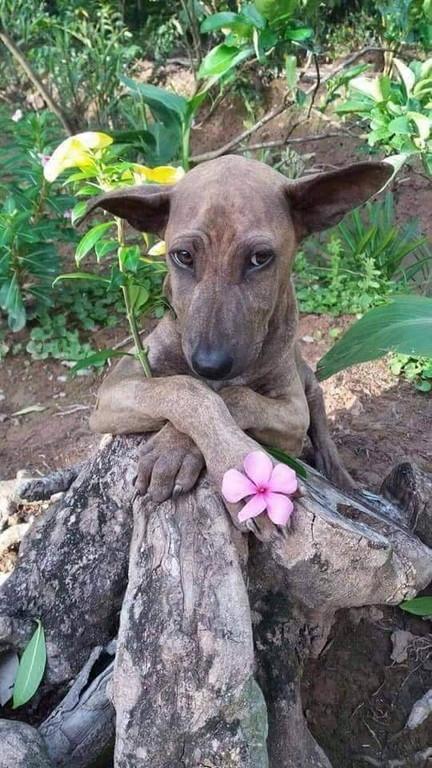 Model dog (2)