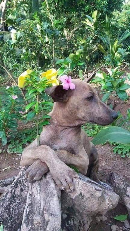 Model dog (3)