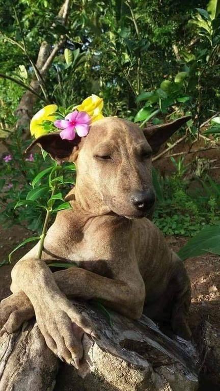 Model dog (1)