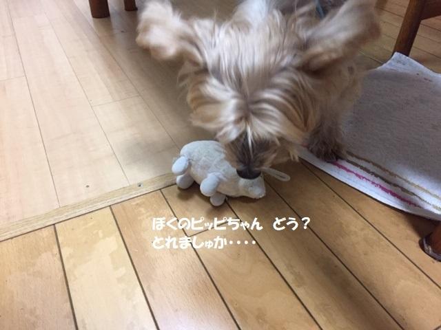 ぴー (1)