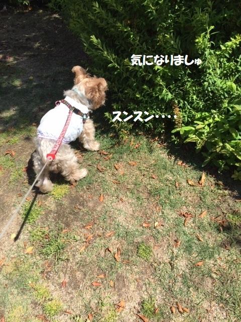 散歩1 (1)