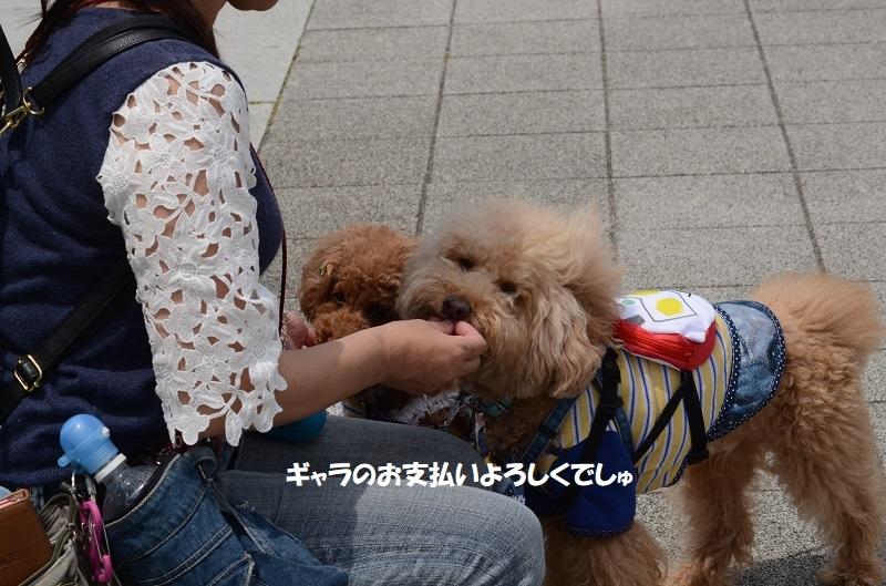DSC_8191.jpg