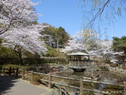 松ヶ岡公園6