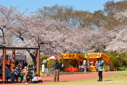 松ヶ岡公園5
