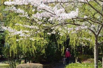 松ヶ岡公園4
