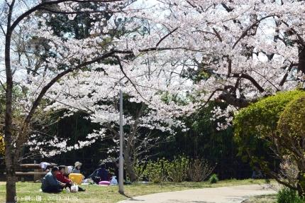 松ヶ岡公園8