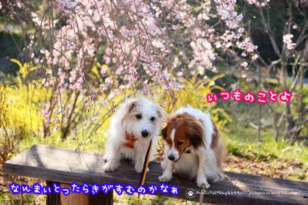190404_hanaitiban21.jpg