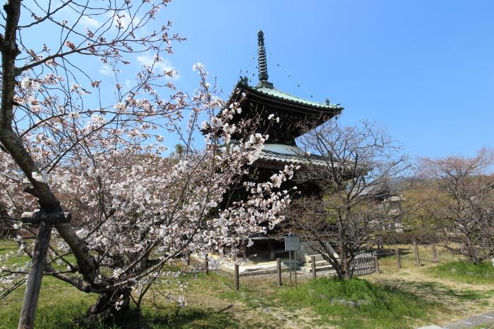 清凉寺の桜