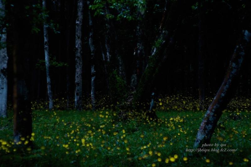 姫の森3(blog)