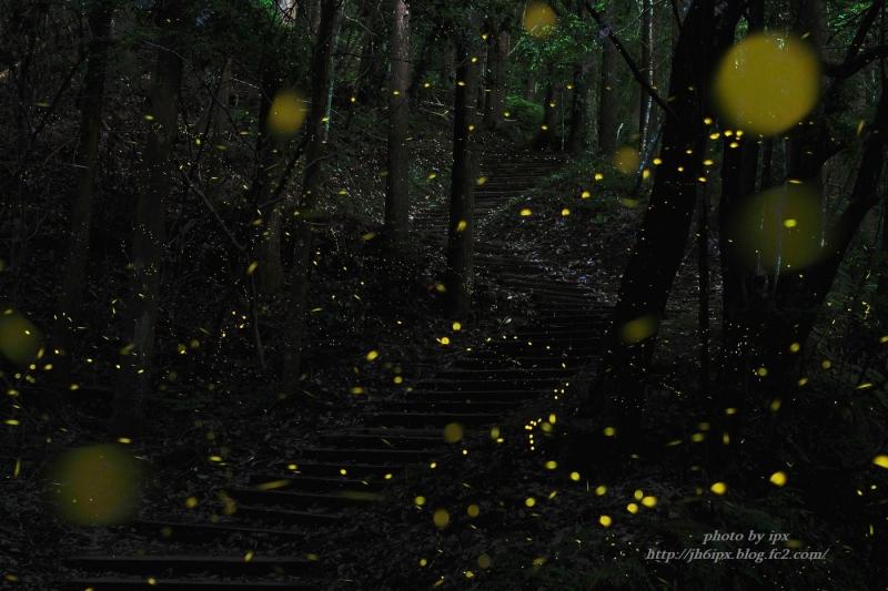 森の舞踏会-2(blog)