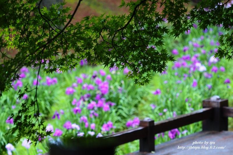 P6021336(blog).jpg