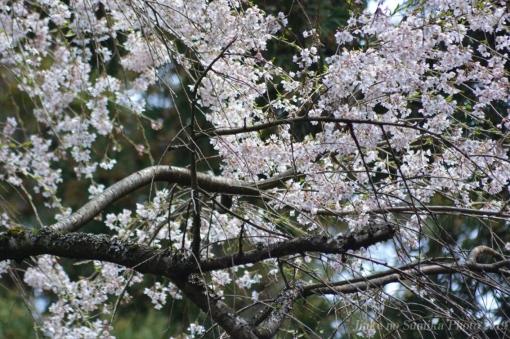20-04-12-H05.jpg