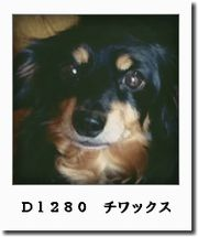d1280-0a1.jpg