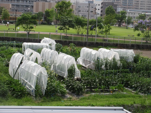 blog9-0610自主栽培