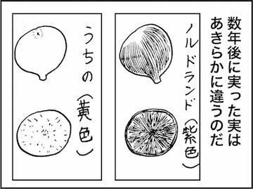 kfc01560-6