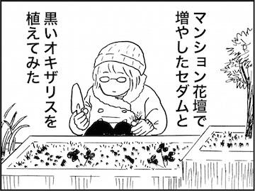 kfc01577-4