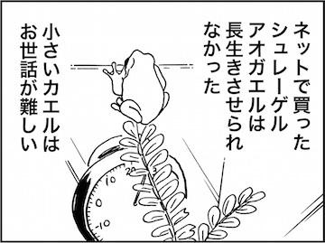 kfc01584-5