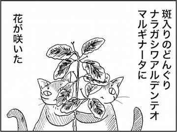 kfc01585-1