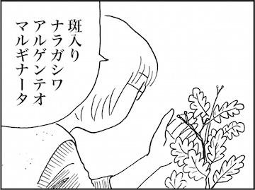 kfc01595-6