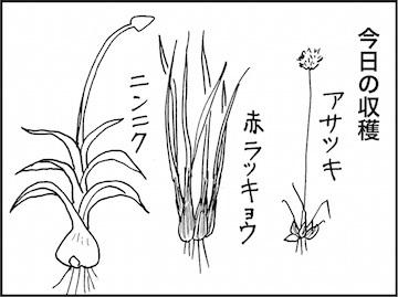 kfc01597-4