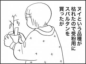 kfc01623-6