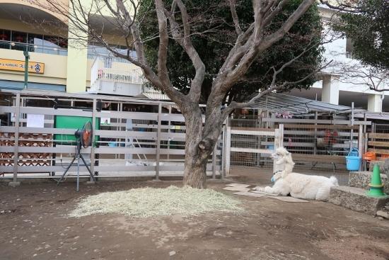 アルパカ広場
