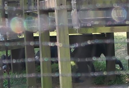 のんほいパーク チンパンジー