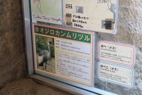 のんほいパーク ホオジロカンムリヅル