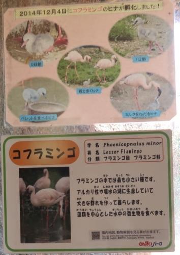 のんほいパーク コフラミンゴ