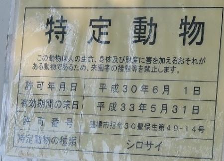 のんほいパーク シロサイ