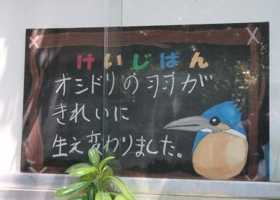のんほいパーク 小鳥