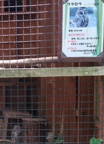 のんほいパーク フクロウ