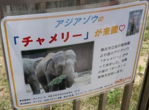 のんほいパーク アジアゾウ