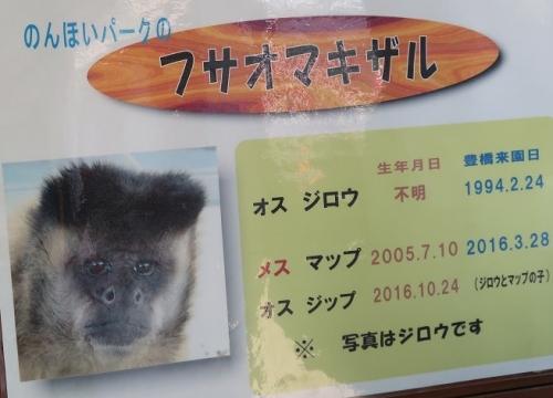 のんほいパーク フサオマキザル
