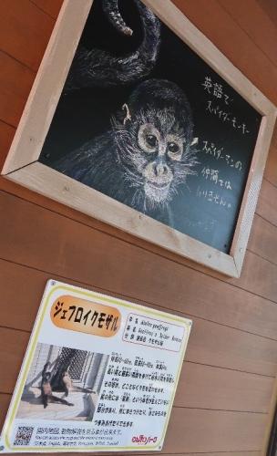 のんほいパーク ジェフロイクモザル
