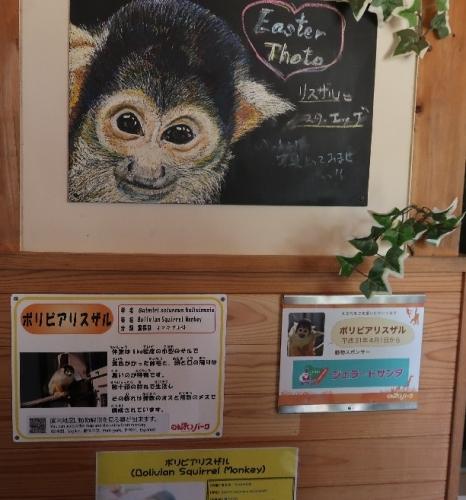 のんほいパーク ボリビアリスザル