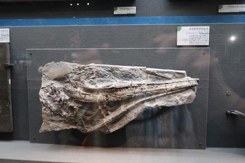 のんほいパーク イクチオザウルス