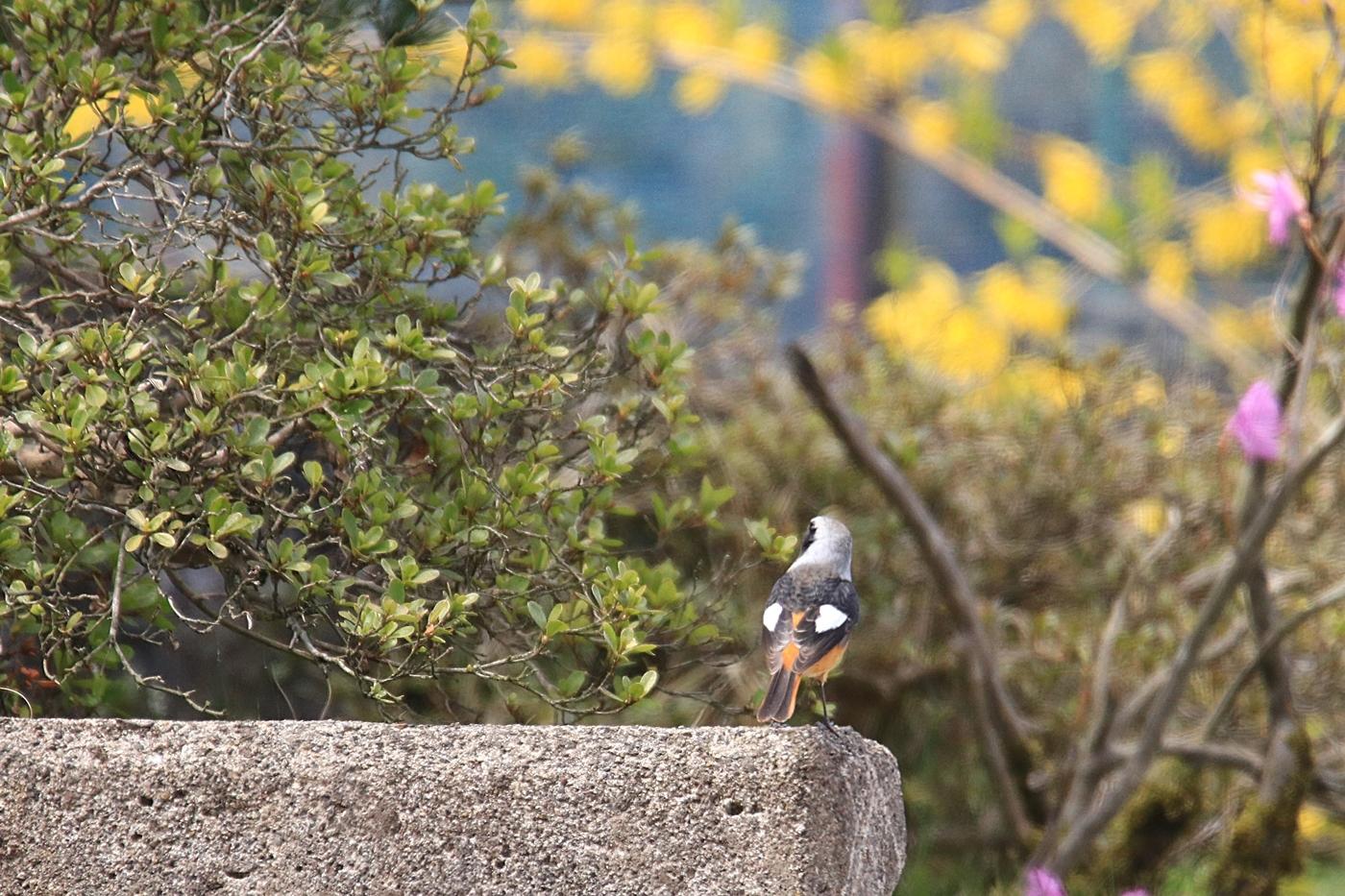 ●STP2019・4・8福島潟鳥_299