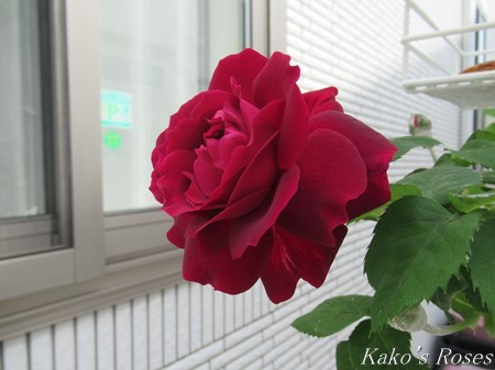 s-IMG_1371kako.jpg