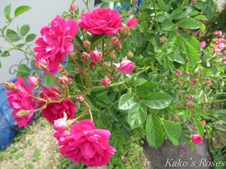 s-IMG_1485kako_2019052318383132b.jpg