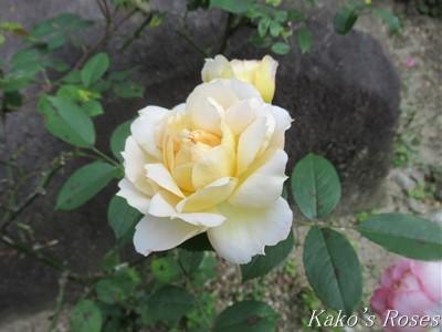 s-IMG_1502kako.jpg