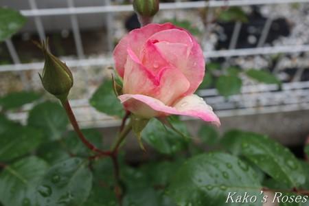 s-IMG_2093kako.jpg