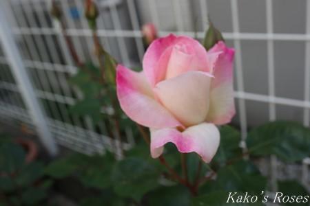 s-IMG_2139kako.jpg