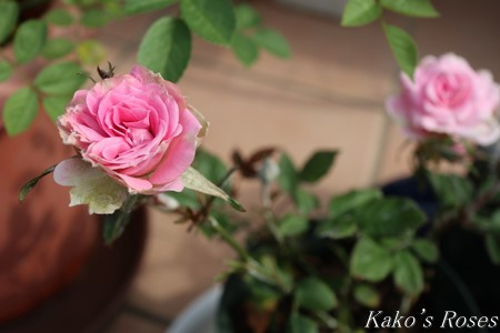 s-IMG_2218kako.jpg