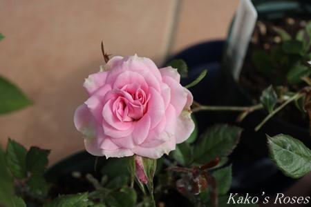 s-IMG_2219kako.jpg