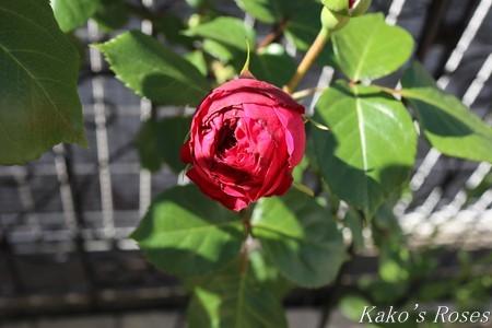 s-IMG_2256kako.jpg